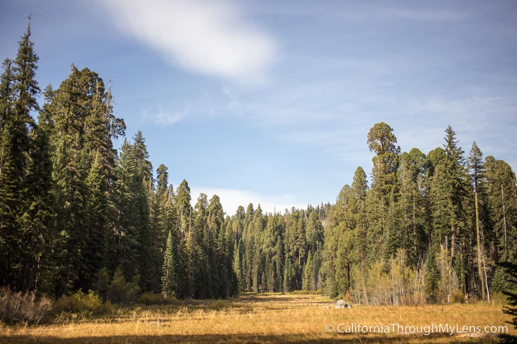 Crescent Meadow In Sequoia National Park California