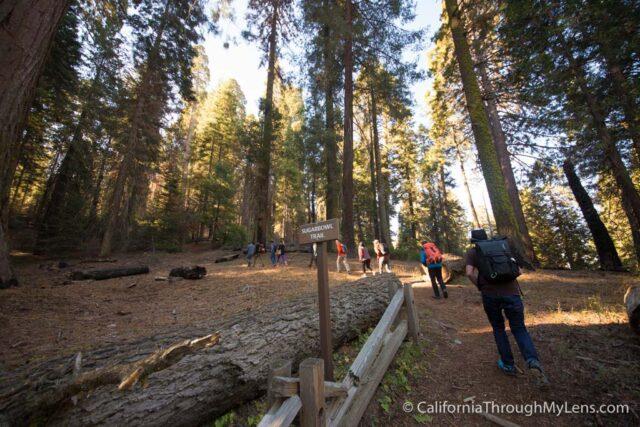 Sugarbowl Trail-1