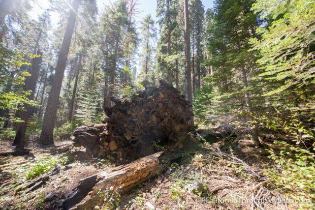 Sugarbowl Trail-11