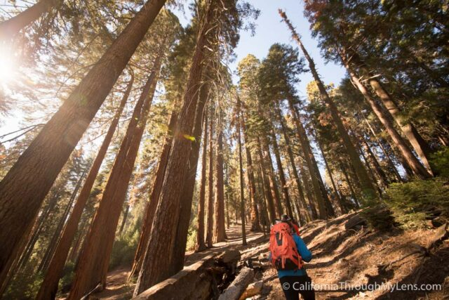 Sugarbowl Trail-3