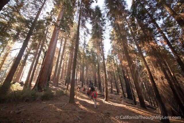 Sugarbowl Trail-4