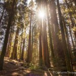 Sugarbowl Loop in Redwood Canyon, Sequoia National Park