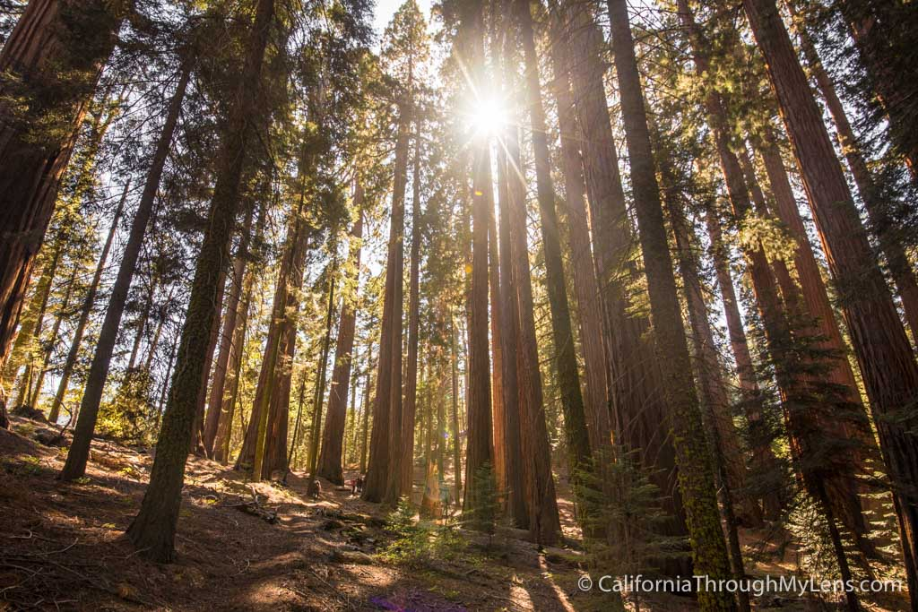 Sequoia Amp Kings Canyon National Park Guide Hikes Caves