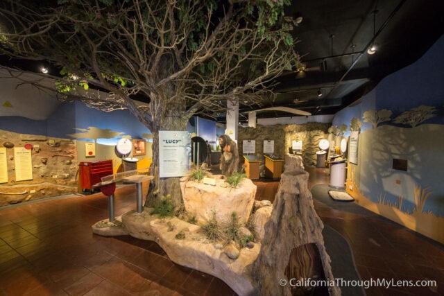 Museum of Man-11