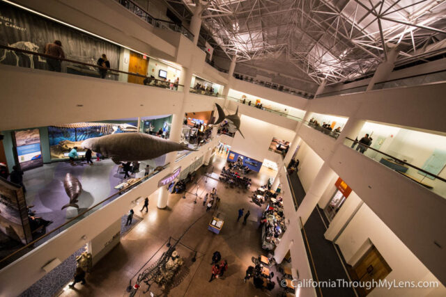 Natural History Museum San Diego-7