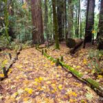 Nature Trail in Richardson Grove State Park