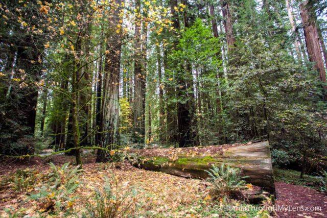 Richardson State Park-3