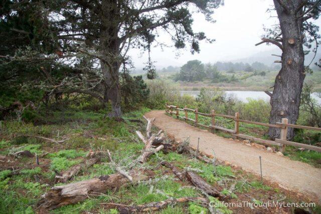 Ano Nuevo State Park-4