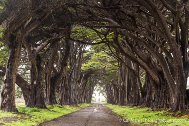 Cypress Tree Tunnel-3