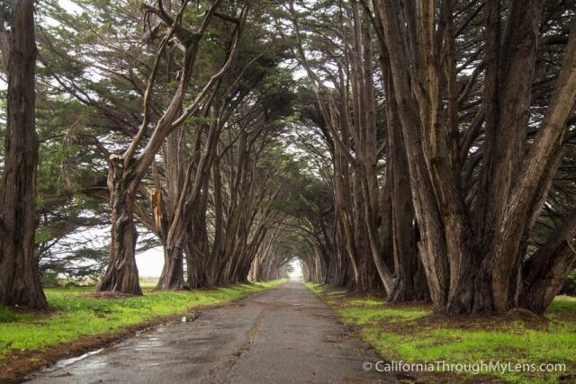 Cypress Tree Tunnel-5