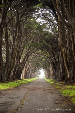 Cypress Tree Tunnel-6