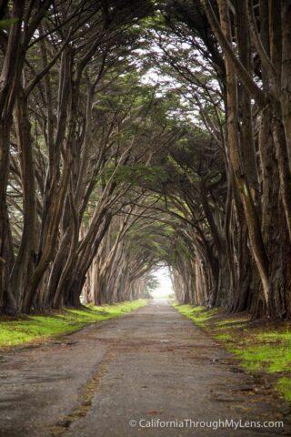 Cypress Tree Tunnel-6