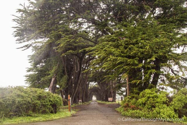 Cypress Tree Tunnel-8