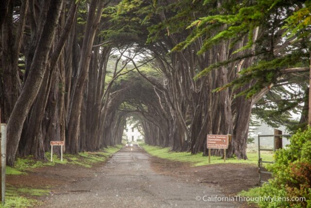 Cypress Tree Tunnel-9