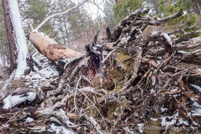 Snowshoe Fallen Leaf Lake-12