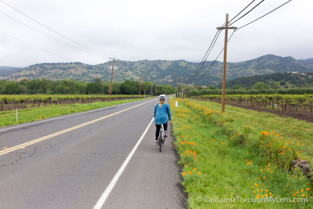 Biking Napa Valley-2