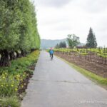 Biking to Wineries in Yountville with Napa Valley Bike Tours