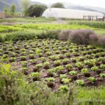 French Laundry Gardens in Yountville
