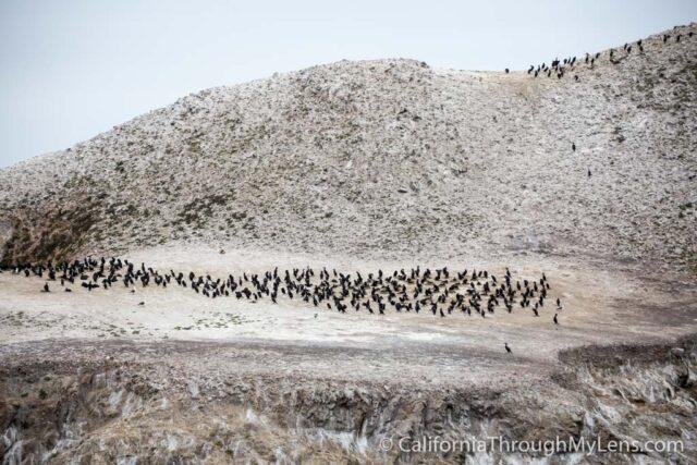 Bird Rock Trail-13