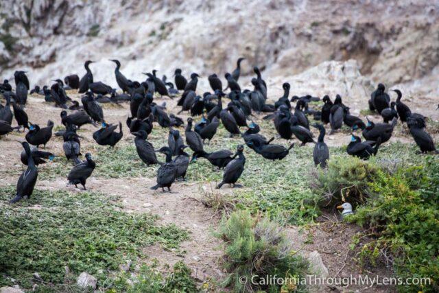 Bird Rock Trail-15