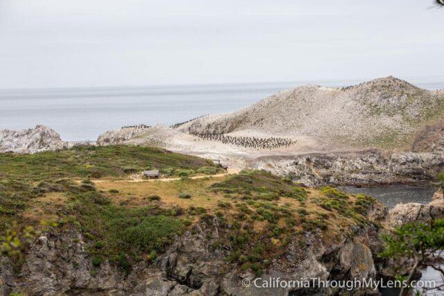 Bird Rock Trail-19