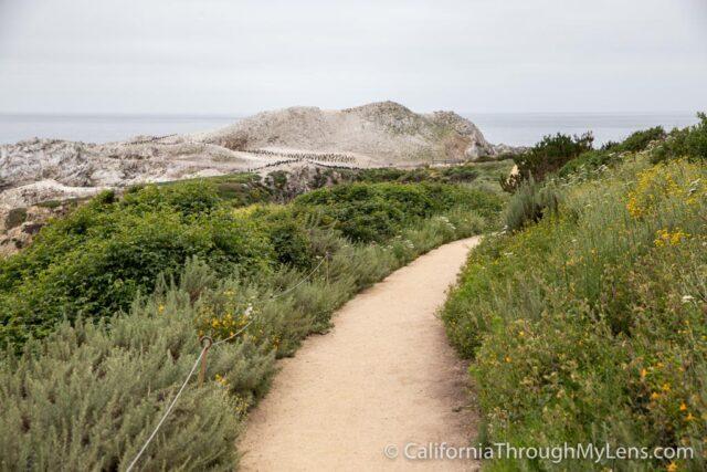 Bird Rock Trail-7