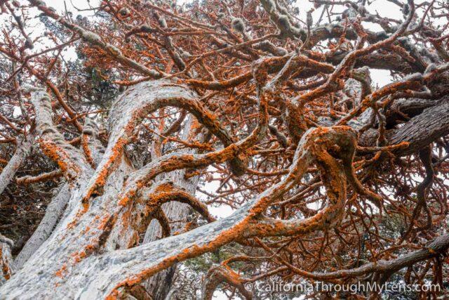 Cypress Grove Trail-14