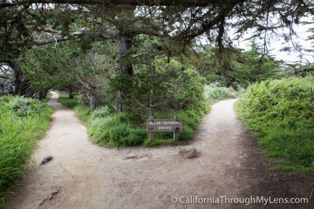 Cypress Grove Trail-4
