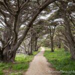 Cypress Grove Trail & Allen Memorial Grove in Point Lobos