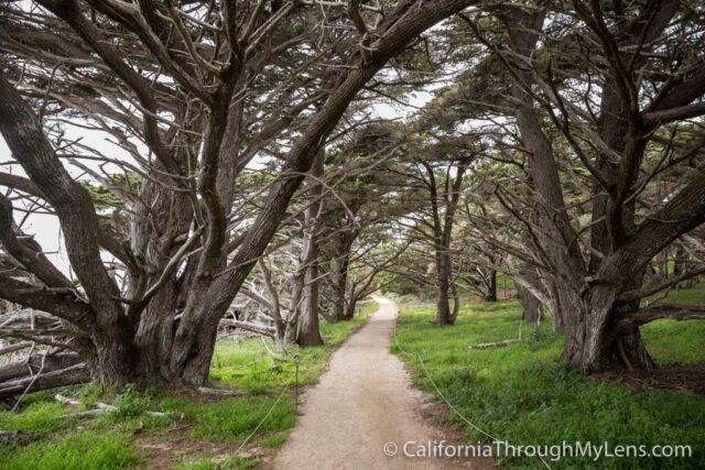 Cypress Grove Trail-5
