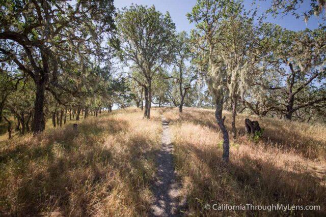 Jim Green Trail-7