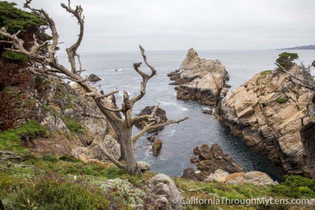 Point Lobos-1