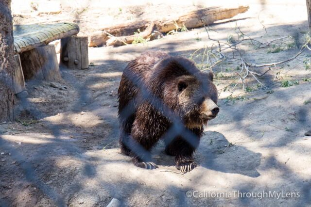 Big Bear Alpine Zoo An Animal Rehibilitation Center In
