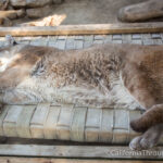 Big Bear Alpine Zoo: An Animal Rehibilitation Center in Moonridge
