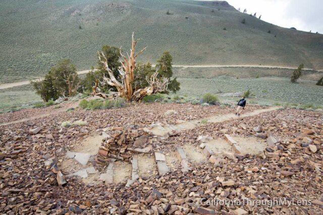 Bristlecone discovery trail-19