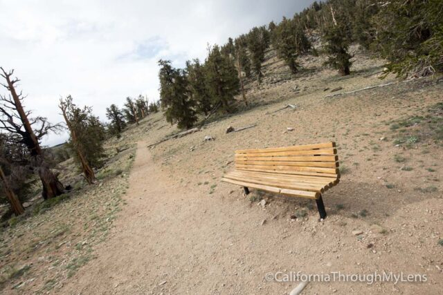 Bristlecone discovery trail-9