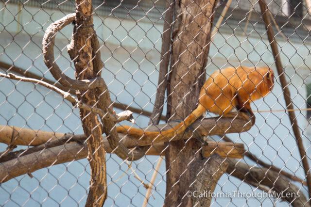 micke grove zoo-10