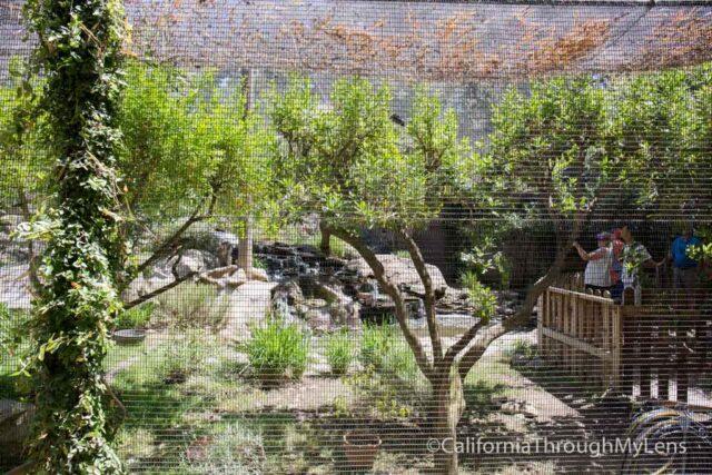 micke grove zoo-18