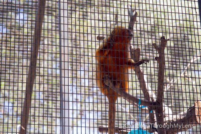 micke grove zoo-19