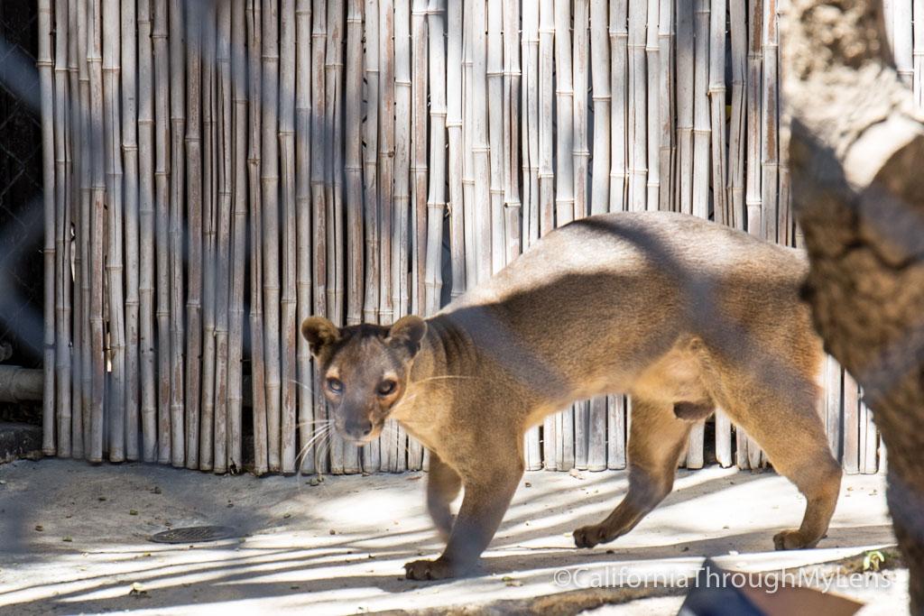 Micke Grove Zoo In Lodi California Through My Lens