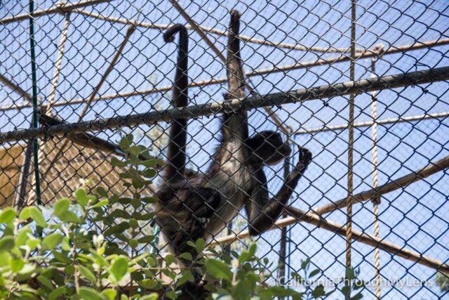 micke grove zoo-6