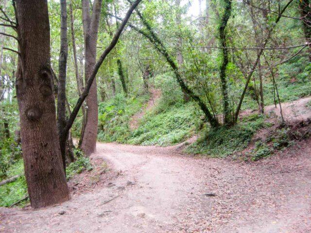 SC Delaveaga Park