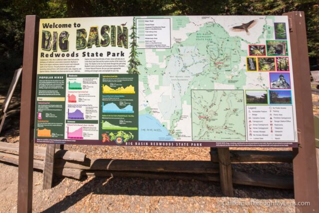 redwood grove big basin-1