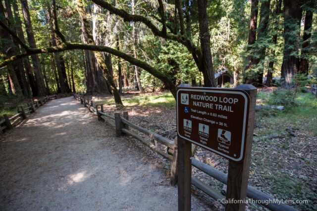 redwood grove big basin-2