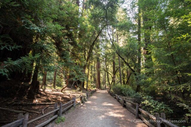 redwood grove big basin-4