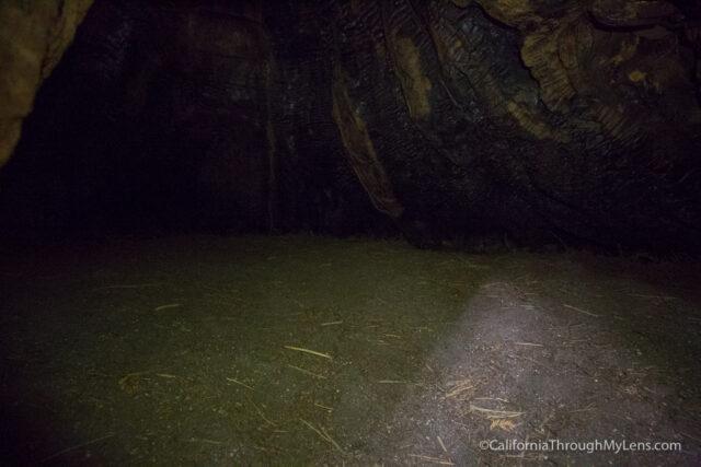 redwood grove henry cowell-13