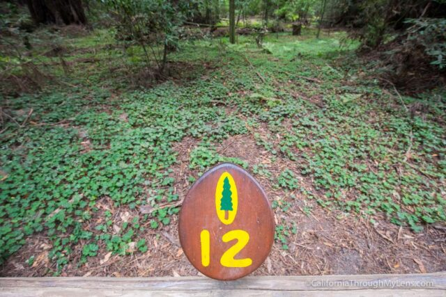 redwood grove henry cowell-18