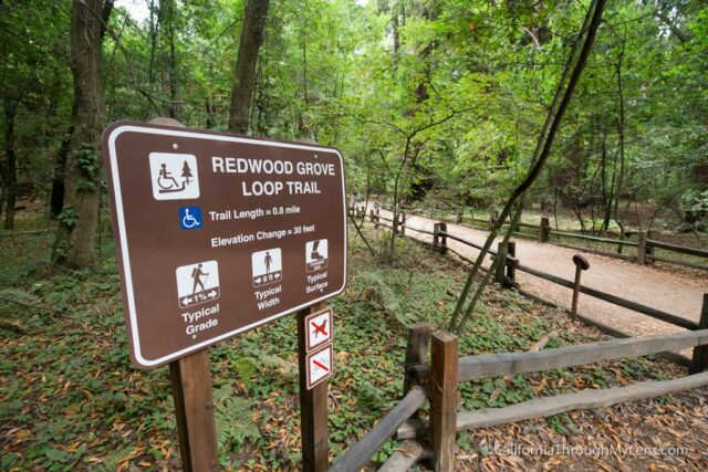 redwood grove henry cowell-2