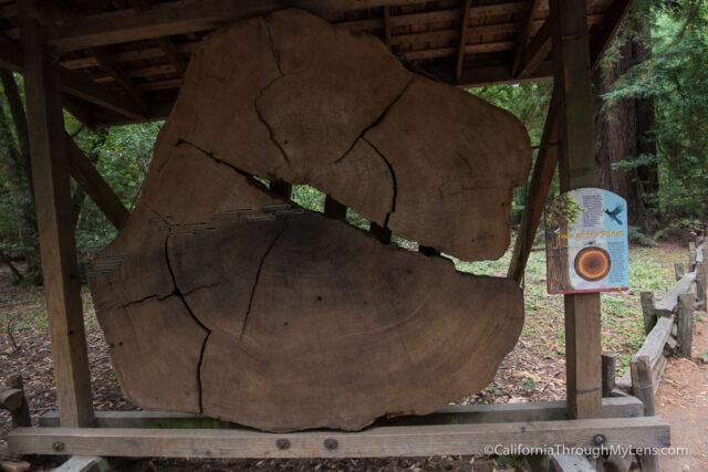 redwood grove henry cowell-21