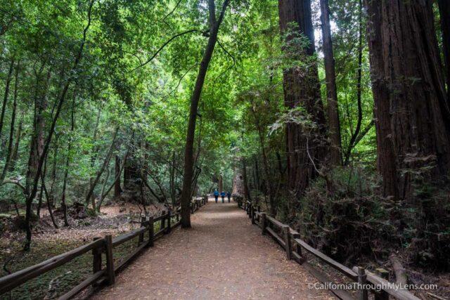 redwood grove henry cowell-7